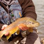 trout fishing near vacation rental in Montana